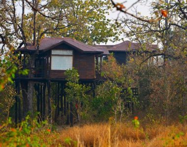 Pench Tree Lodge, Pench National Park, Madhya Pradesh